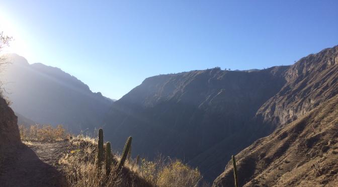A la découverte du canyon de Colca